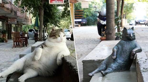 turkish-cat